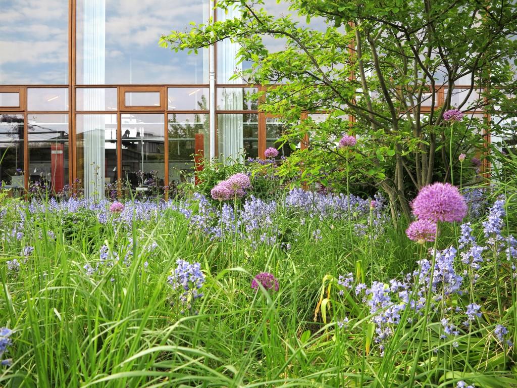 Haven i maj_foto JJW