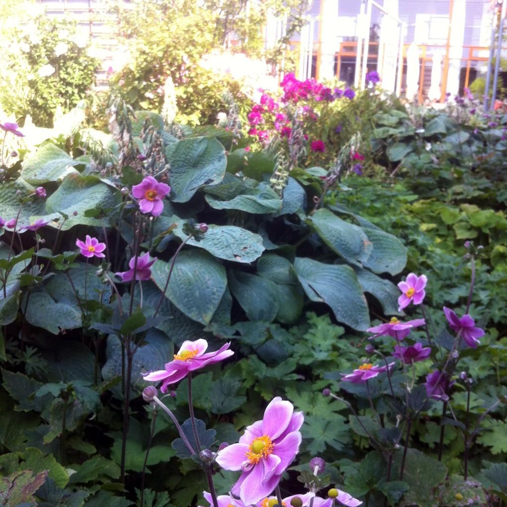 Haven i august_foto JJW